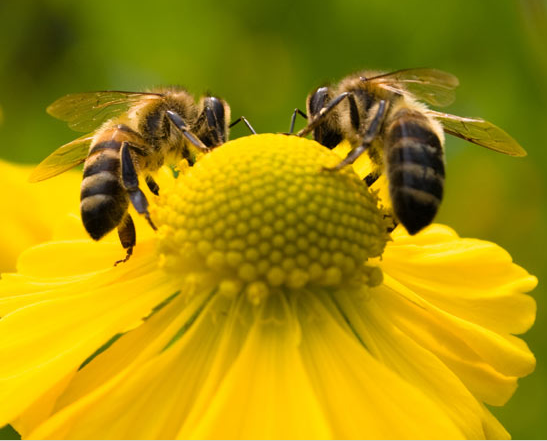 2bees on yellow